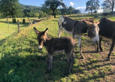 Unterwegs mit Eseln
