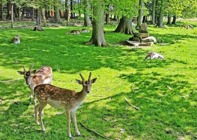 Wildpark Wiehl
